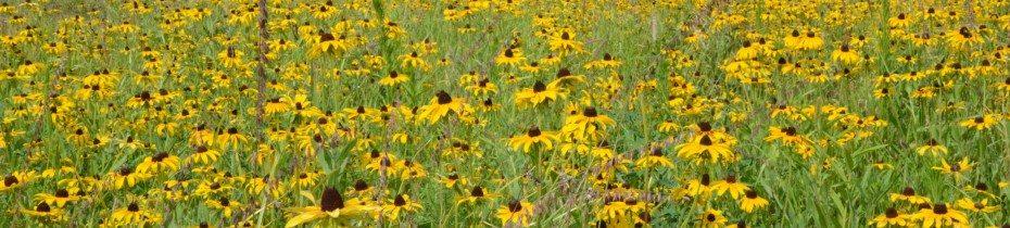 SoKY Wild Ones Native Plant Sale
