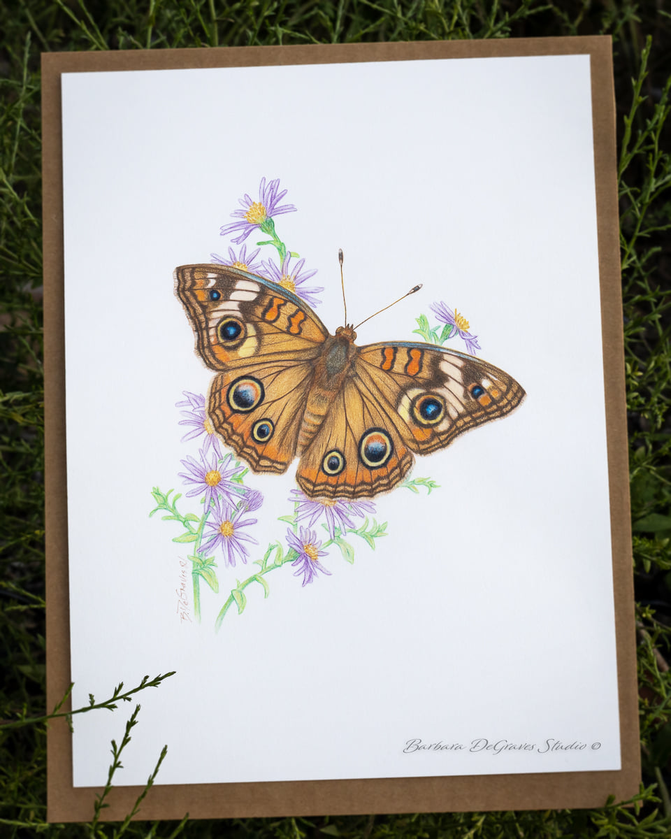 butterfly drawing by Barbara DeGraves